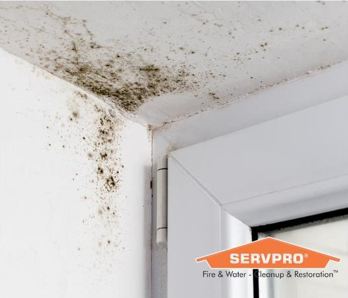 Mold growth in the corner of a home.